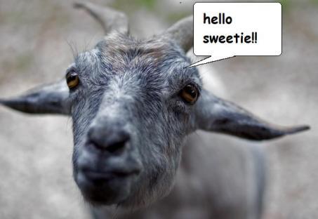muslim goat