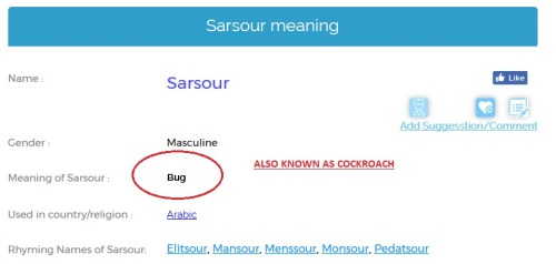 sarsour cockroach